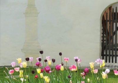 Kloesterle Tulpen